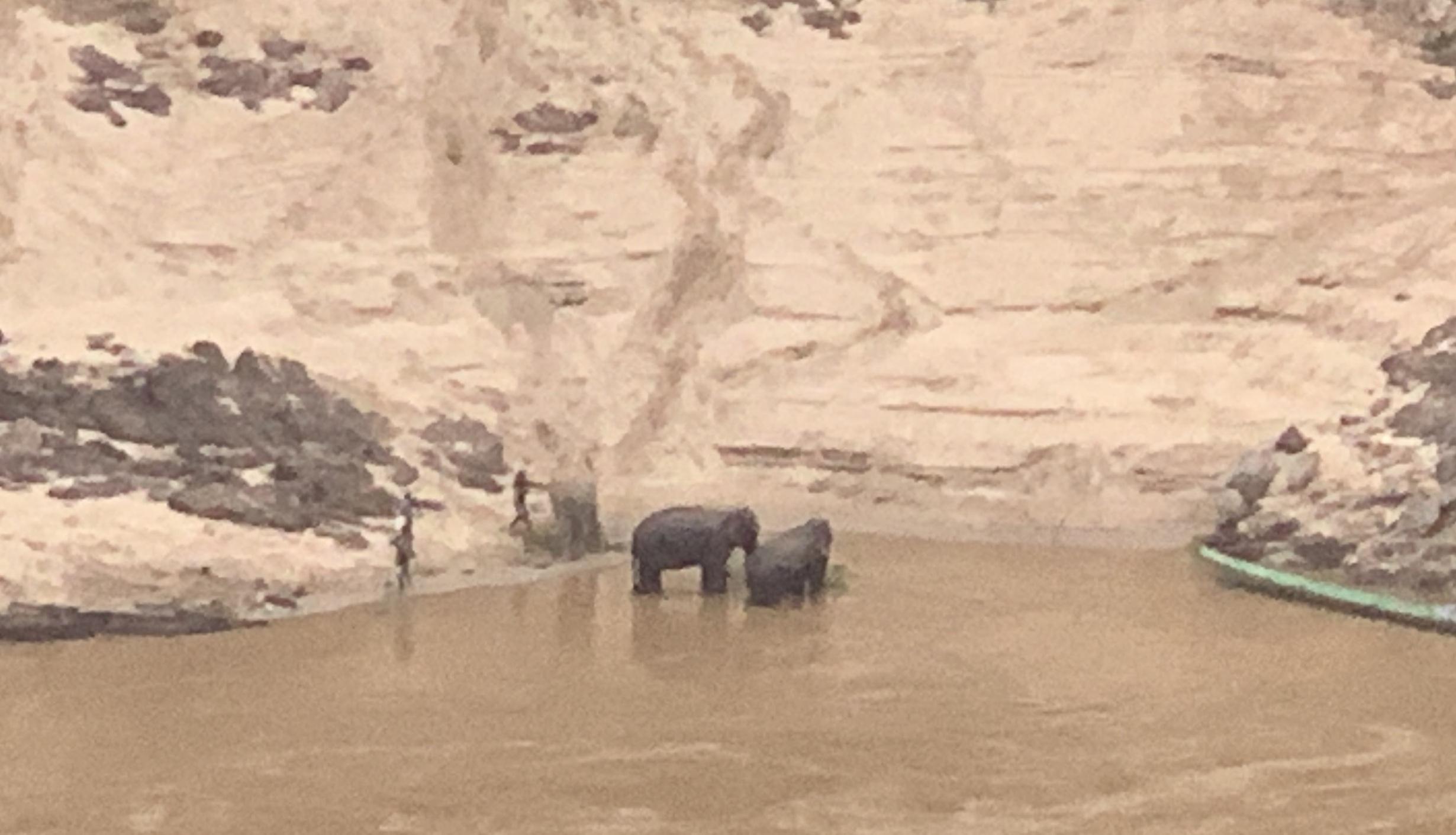 Le bain des éléphants le matin dans le Mékong.