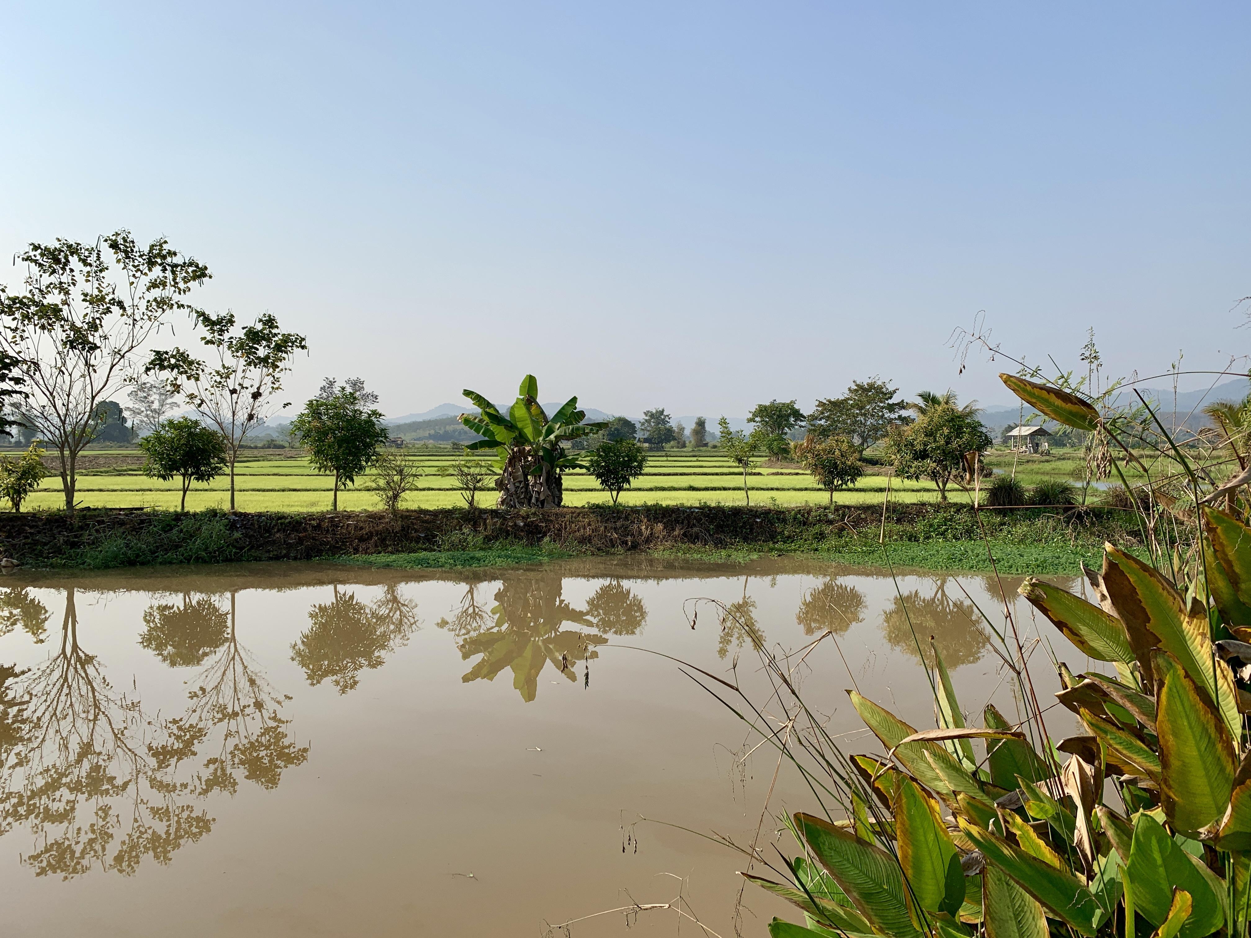 De rizières en rizières jusqu'à Chiang Raï au Nord de la Thaïlande.
